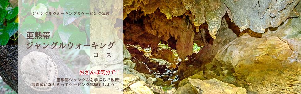 西表島鍾乳洞探検、亜熱帯ジャングルウォーキングツアー