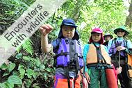 西表島マングローブカヌー&滝あそびいっぱいツアー珍しい動植物達