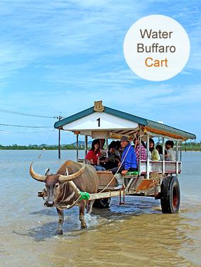 Mangrove kayaking & Yubu Island tour, Water buffalo cart