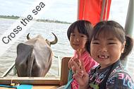 Iriomote Island, Mangrove kayaking & Yubu Island tour, Mangrove kayaking