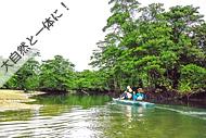 西表島・マングローブカヌー体験