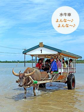 マングローブカヌー&由布島ツアー・由布島水牛車