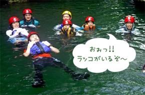 b_1408_ラッコ泳ぎ03